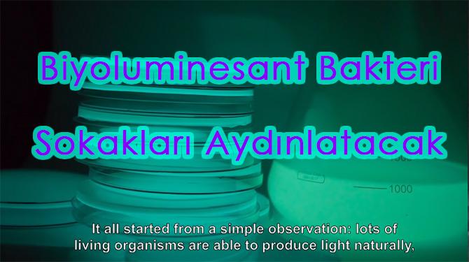 Biyoluminesant Bakteri Sokakları Aydınlatacak
